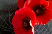 The beautiful prayers said on Remembrance Sunday by Peter Baker