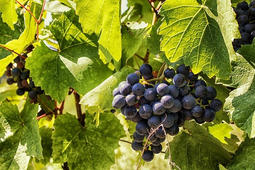 Are we the workers in the vineyard?